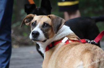 Правила выгула собак в общественных местах