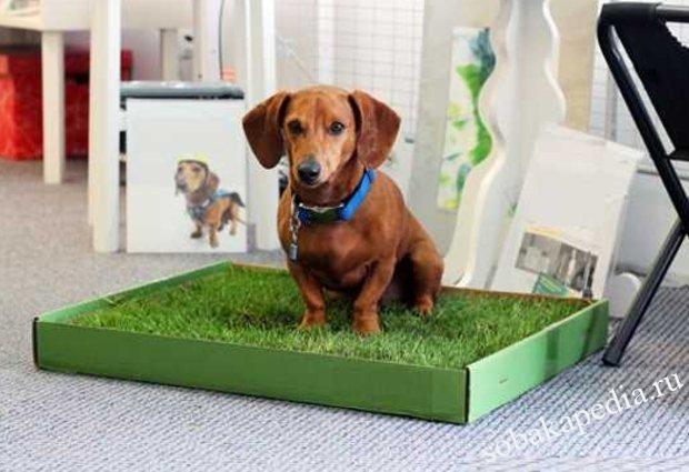 Обустройство туалета для щенка