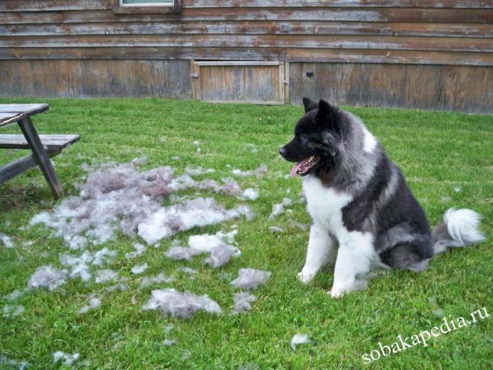 Что делать если собака линяет