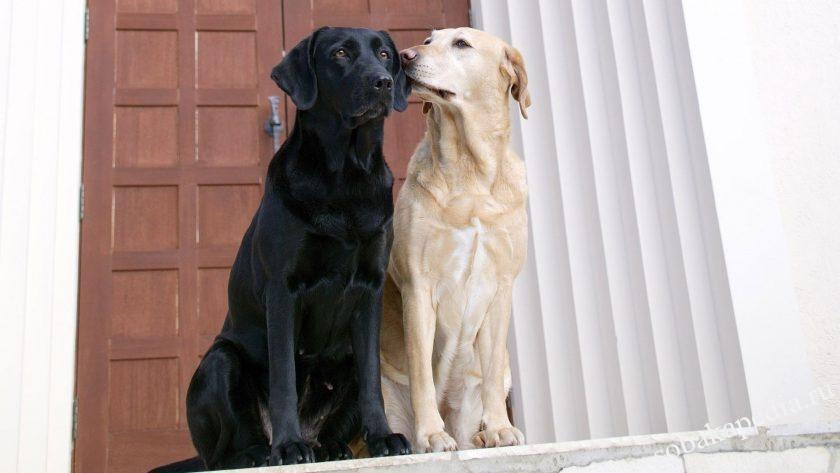 этапы течки у собак