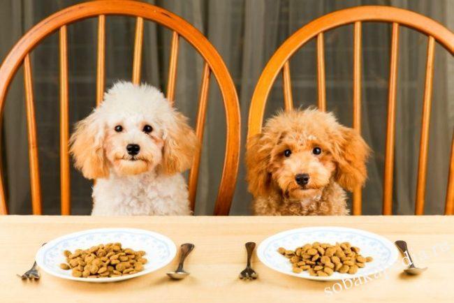 лучшие корма для собак