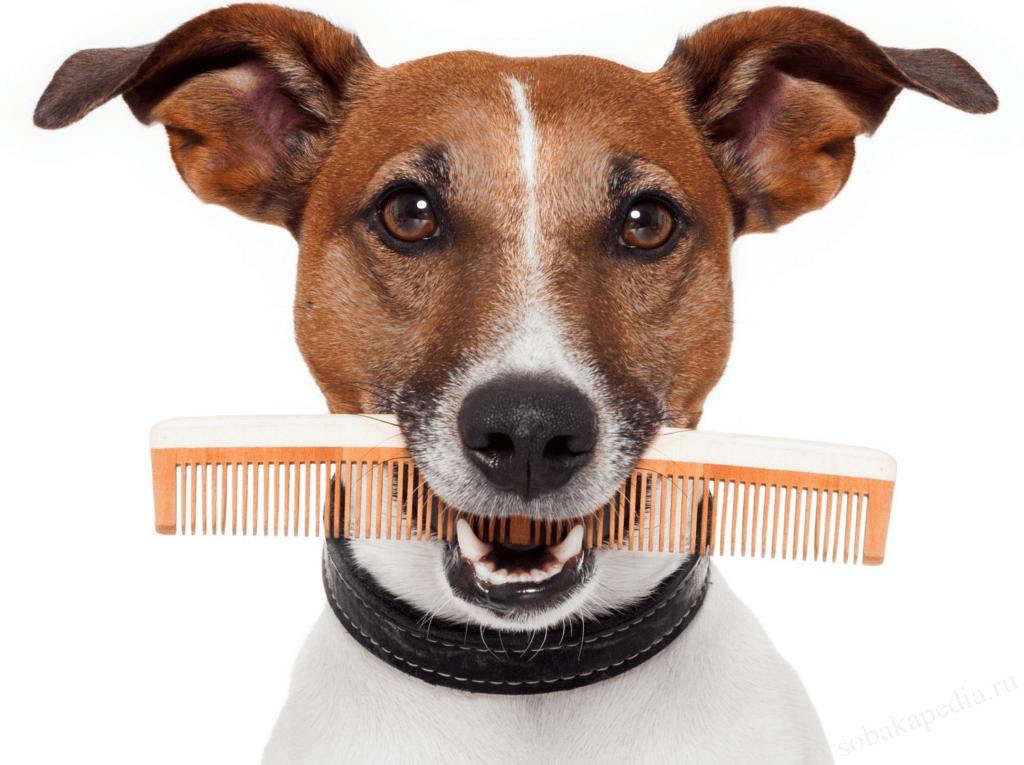 Профилактика линьки у собак