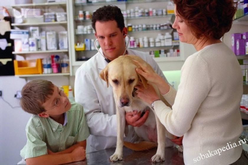 Медикаментозная аллергия у собак