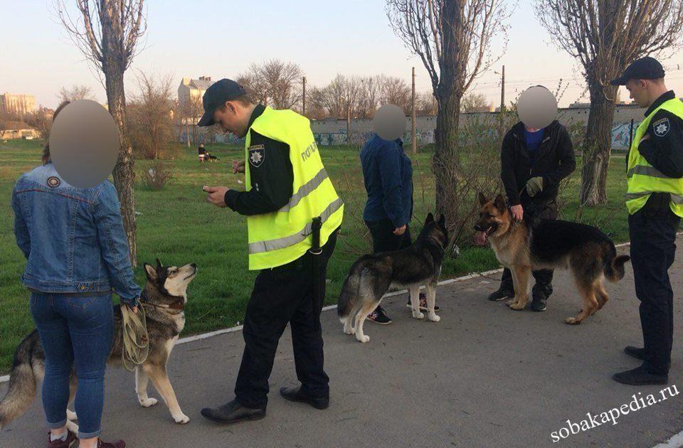 Законы по выгулу собак