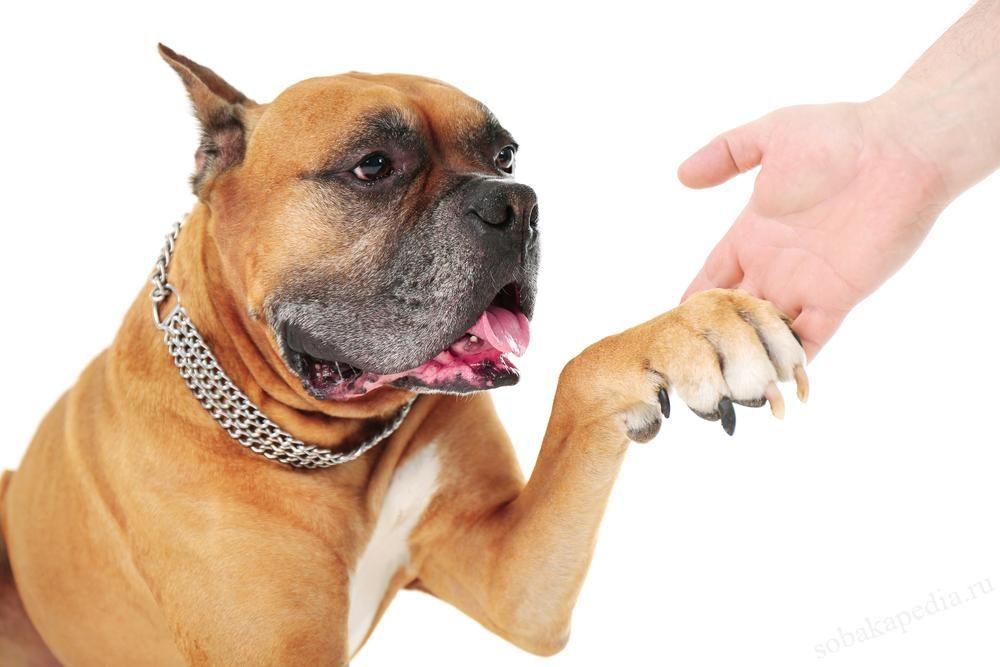 Бруцеллез у собак