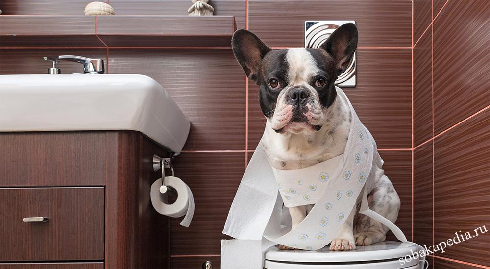 Диагностика простатита у собак