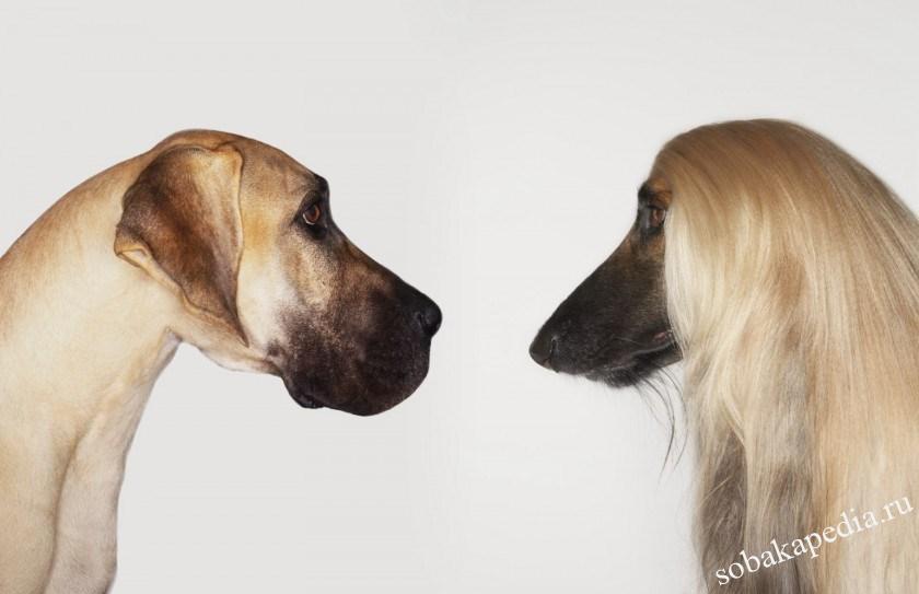 Аллергия на бытовую химию у собак