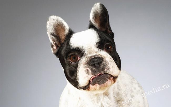 Профилактика микроспории у собак