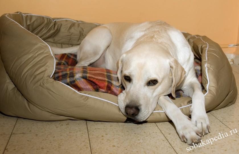 Профилактика венерической саркомы у собак