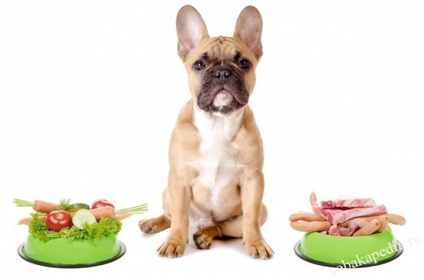 Профилактика панкреатита у собак