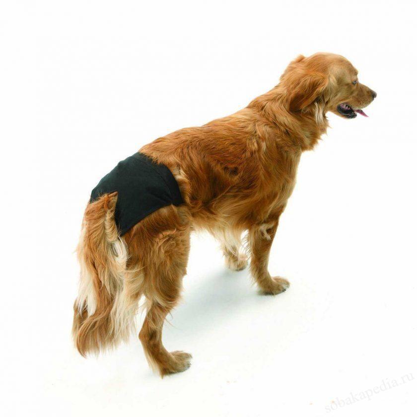 трусы для собак