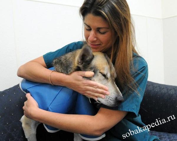 Как ухаживать за собакой после операции