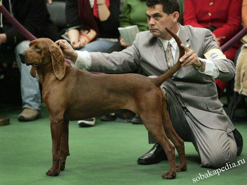 Что такое хейдлинг собак