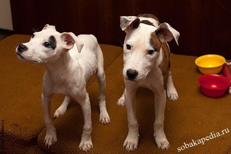 Симптомы рахита у собак