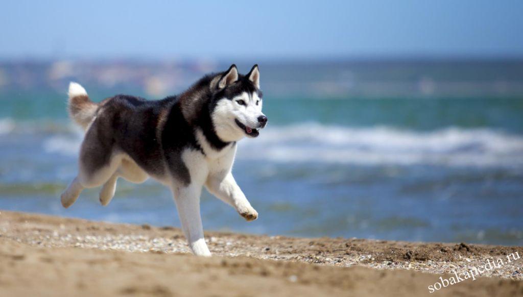 Поведение собак после кастрации