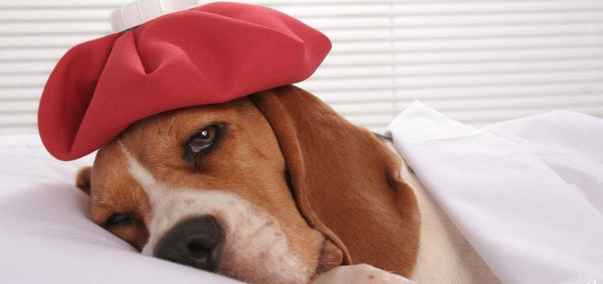 Мочекаменная болезнь у собак