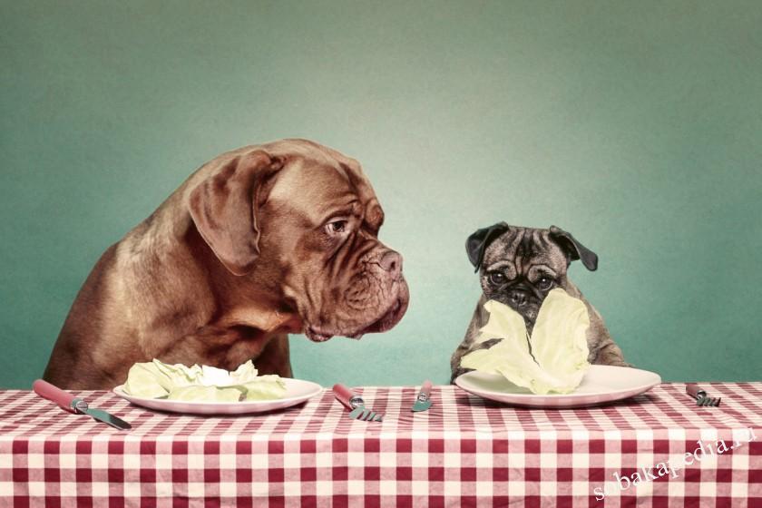 Причины появления панкреатита у собак