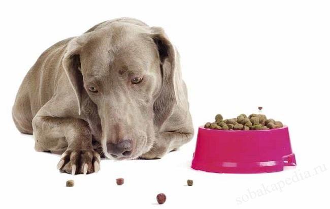 Собака отказывается есть