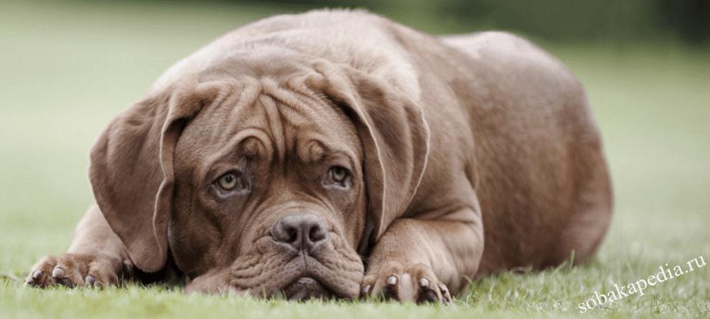 Профилактика артрита у собак