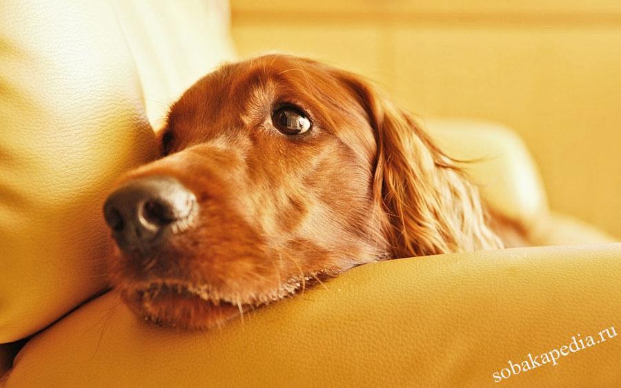 Как ухаживать за собакой после операции стерилизации — полное восстановление