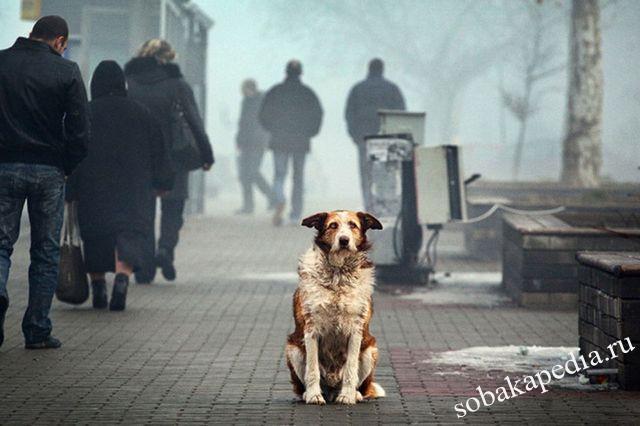 Бруцеллез у собак симптомы и лечение
