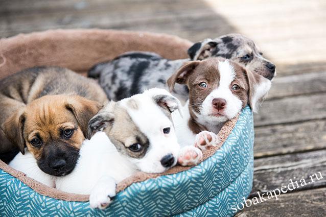 Бруцеллез у собак профилактика