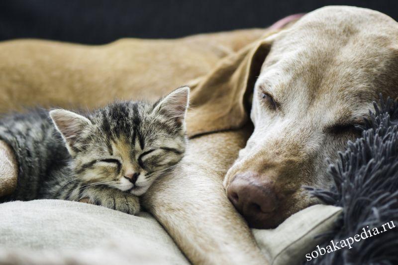 Как подружить кошку и собаку