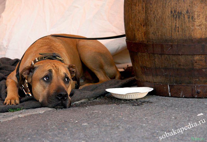 Уход за собакой больной чумкой