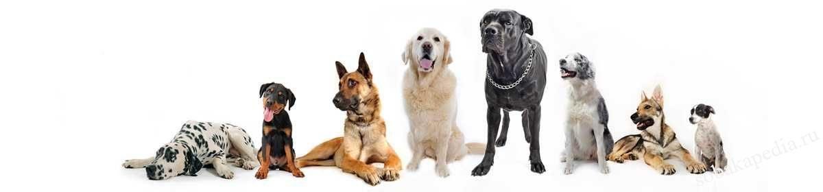 Собакапедия