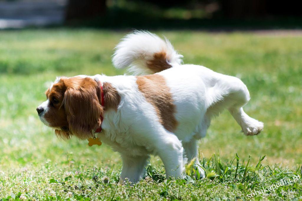 Симптомы мочекаменной болезни у собак