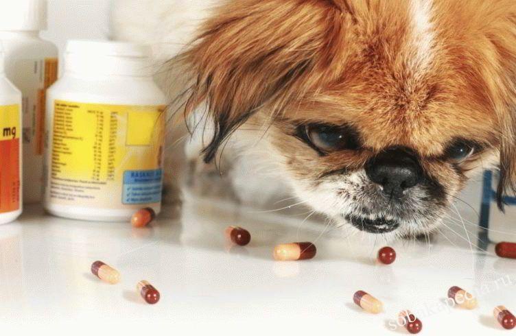 Выбираем подходящий витамины для собак