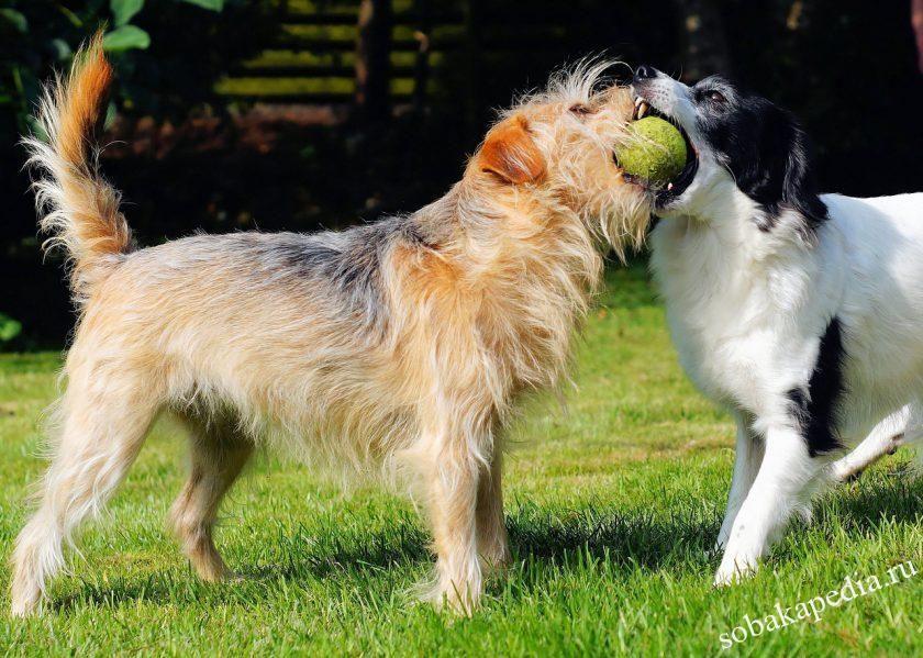 признаки течки у собак