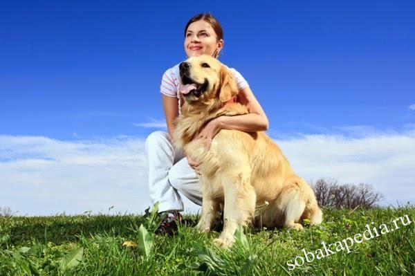 Прогулки с собакой на солнце