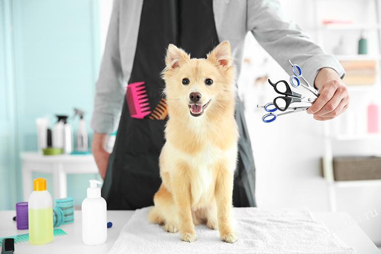 Груминг собак — особенности проведения и каким породам он необходим
