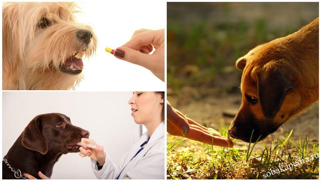 Как давать собаке таблетки