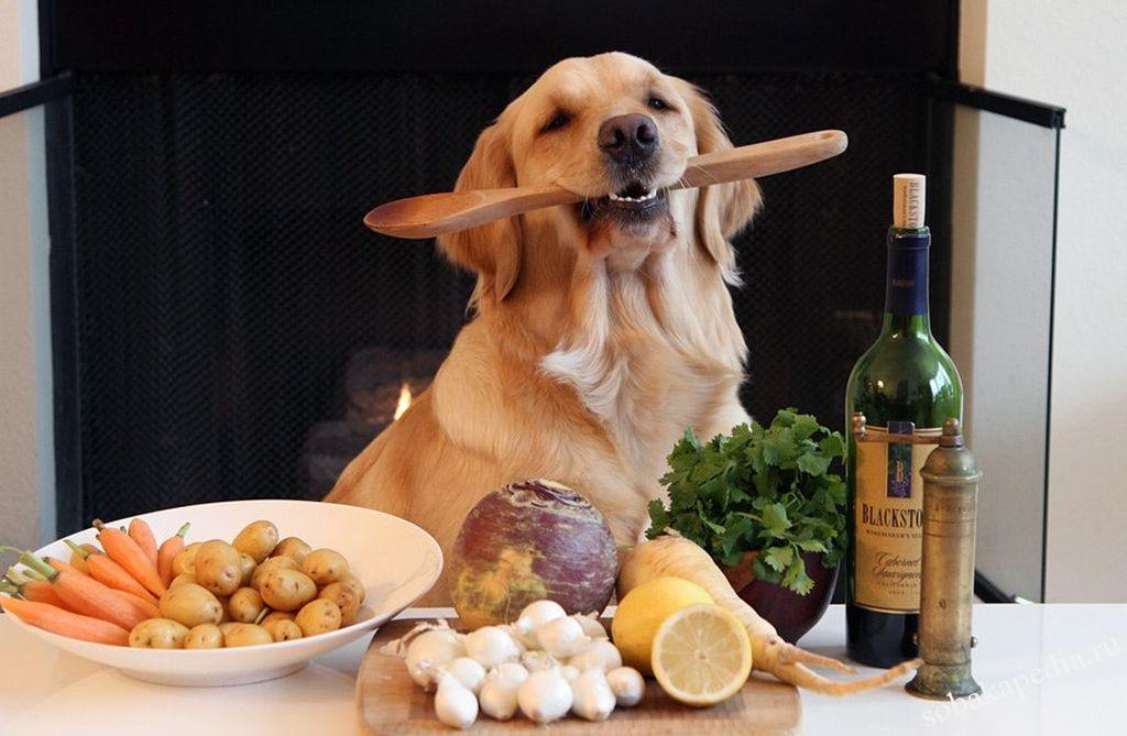 Продукты запрещенные собакам