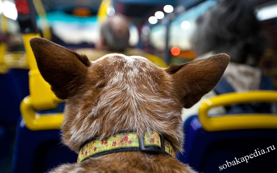 Правила перевозки собак