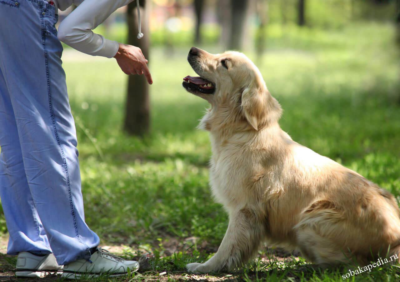 как научить собаку сидеть