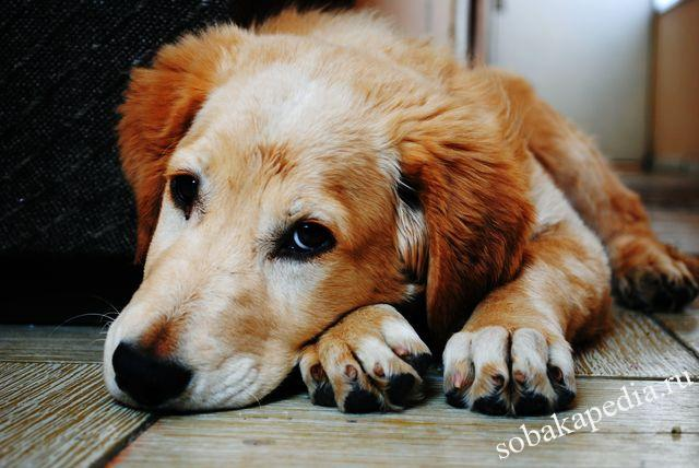 Профилактика простатита у собак