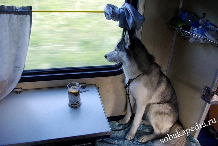Правила перевозки собак в железнодорожном транспорте