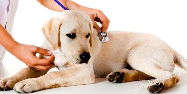 Плюсы кастрации собаки