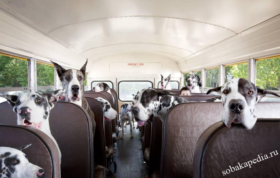 Правила перевозки собак в общественном транспорте