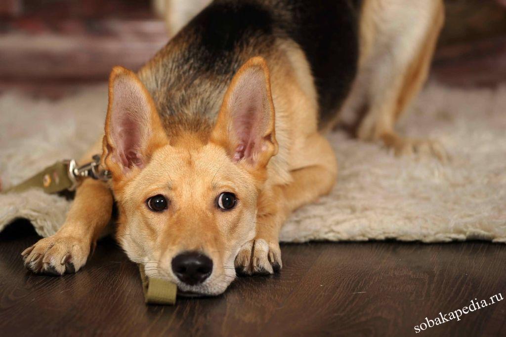 Профилактика мочекаменной болезни у собак