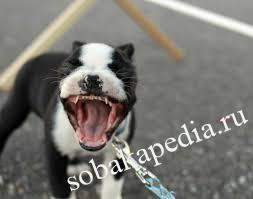 Смена зубов у собаки