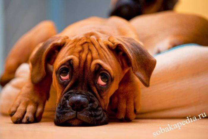 Понос у собаки