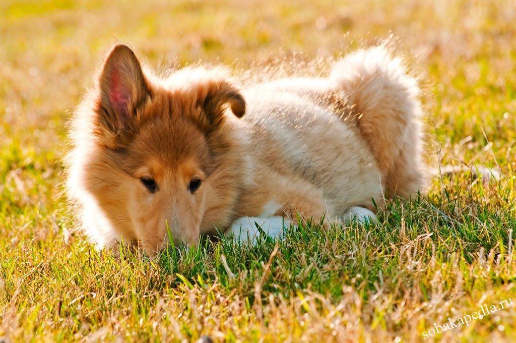 Профилактика эпилепсии у собак