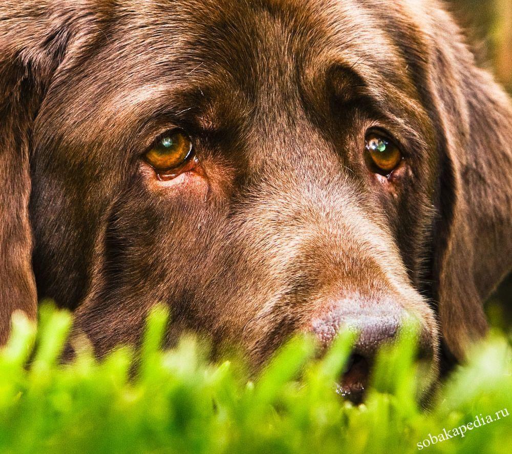 Диарея у собаки — чем лечить и почему возникает
