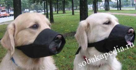 Как выбрать намордник для собаки