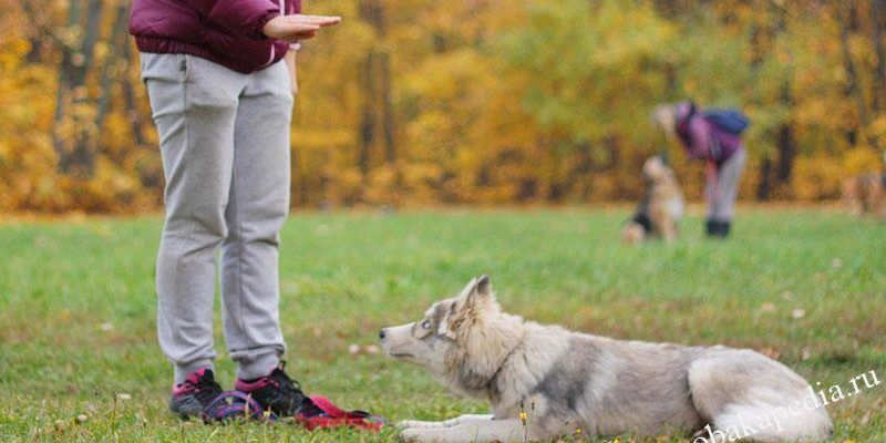 Как научить собаку команде Лежать