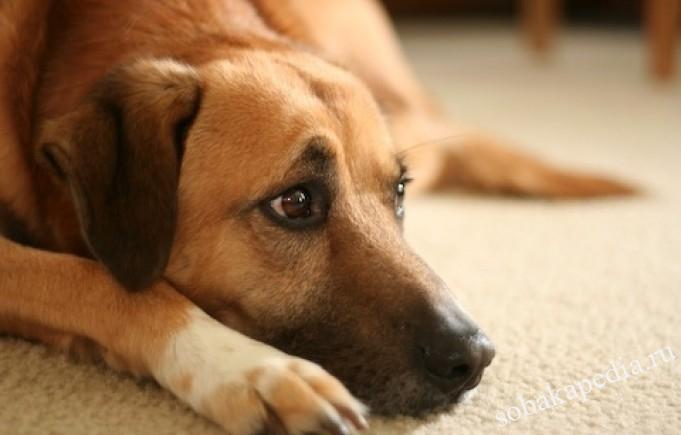 Профилактика экземы у собак